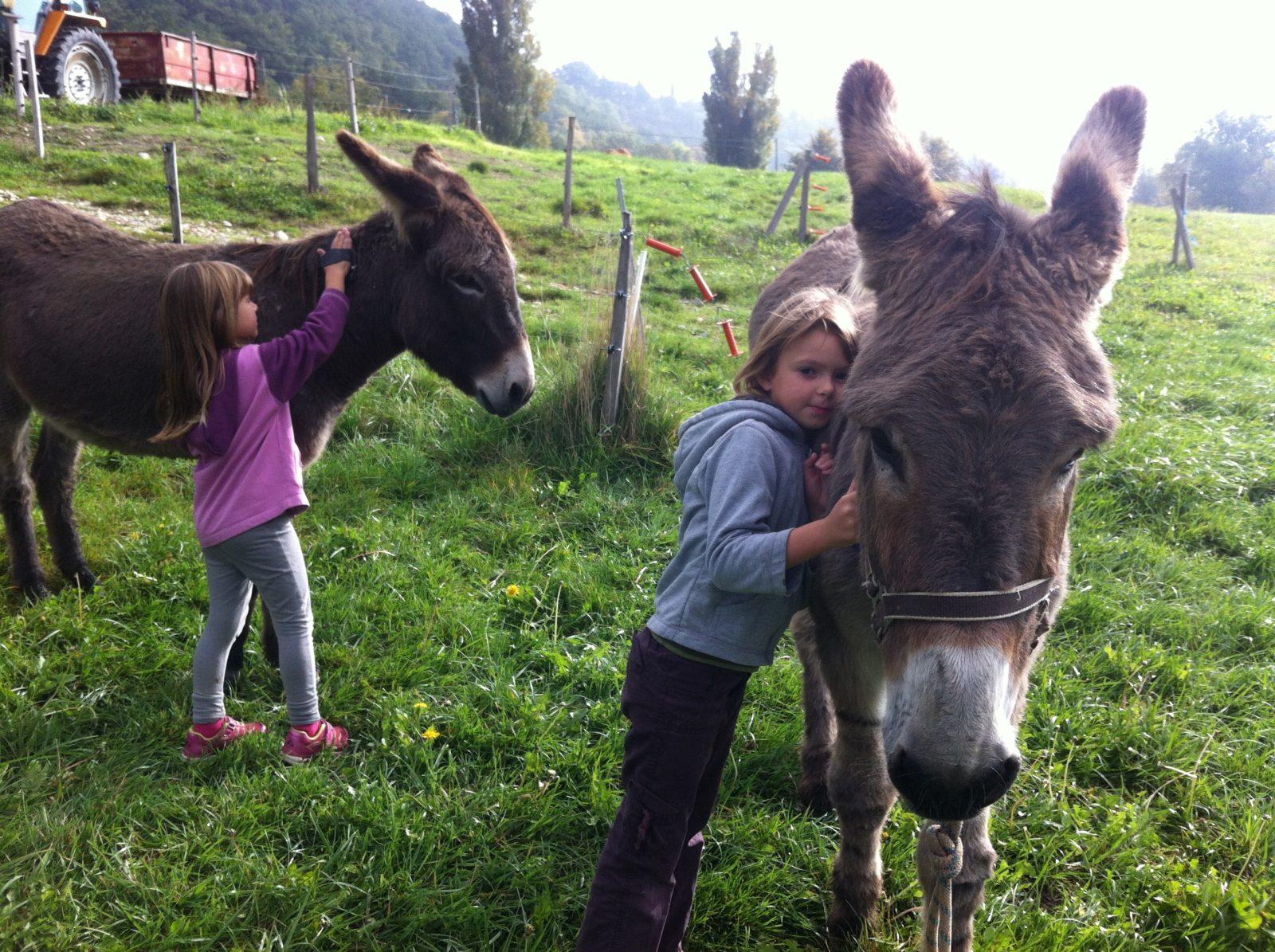 Photo ânes et enfants