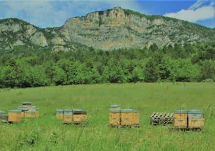 La ruche colombe – Jérémie Barret