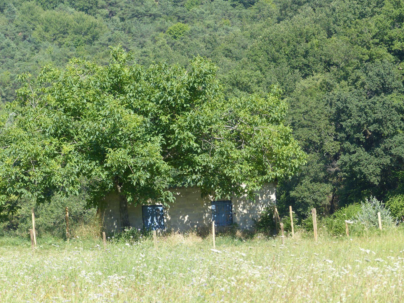 Vue et détails Domaine de la Ruche Apis Ligustica