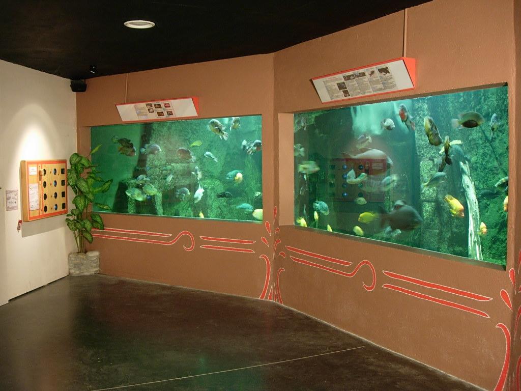 Aquarium6